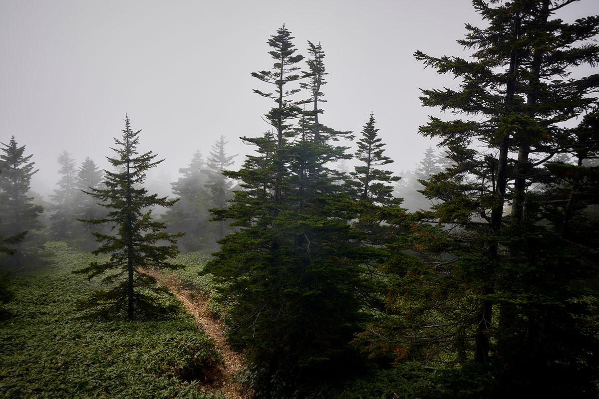 御飯岳-ガスガスの森も良い