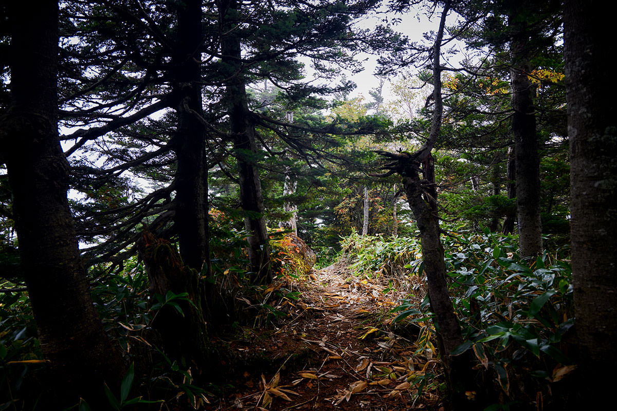 御飯岳-ひたすら木の中を下りていく