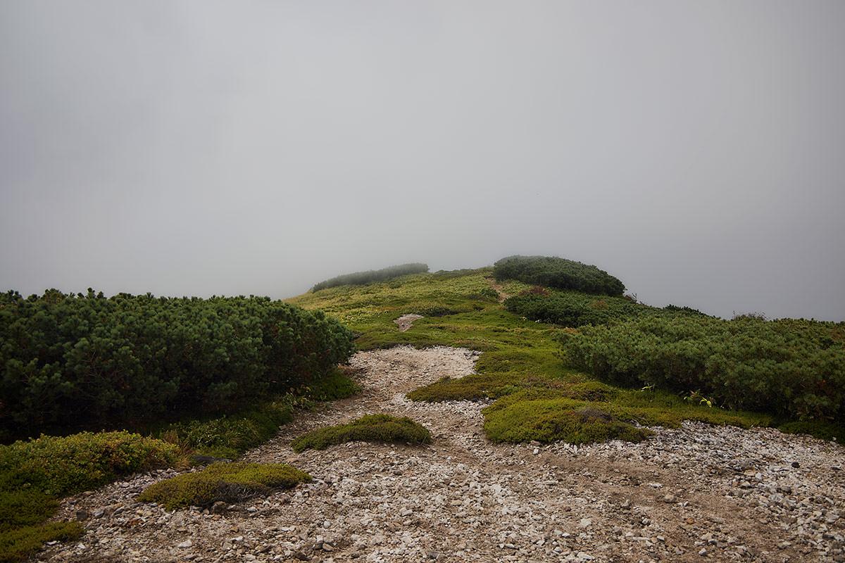 御飯岳-毛無山から登山口へ下りる