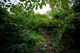 東峰も木の隙間から近く見える