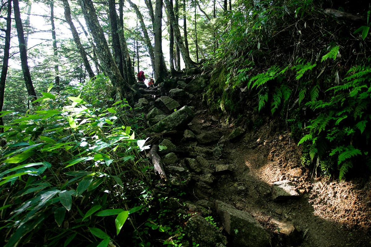 【大天井岳 表銀座】登山百景-眺望は無いけど緑が綺麗