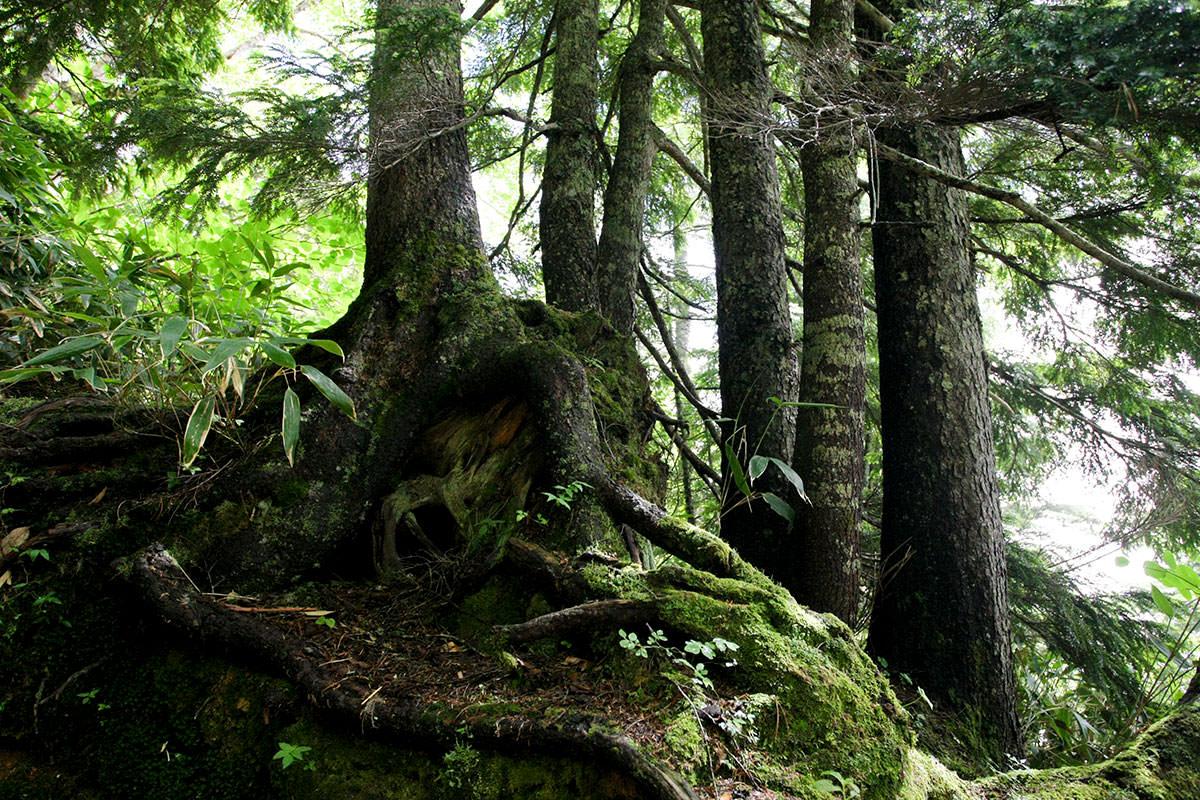 【大天井岳】登山百景-緑が深い