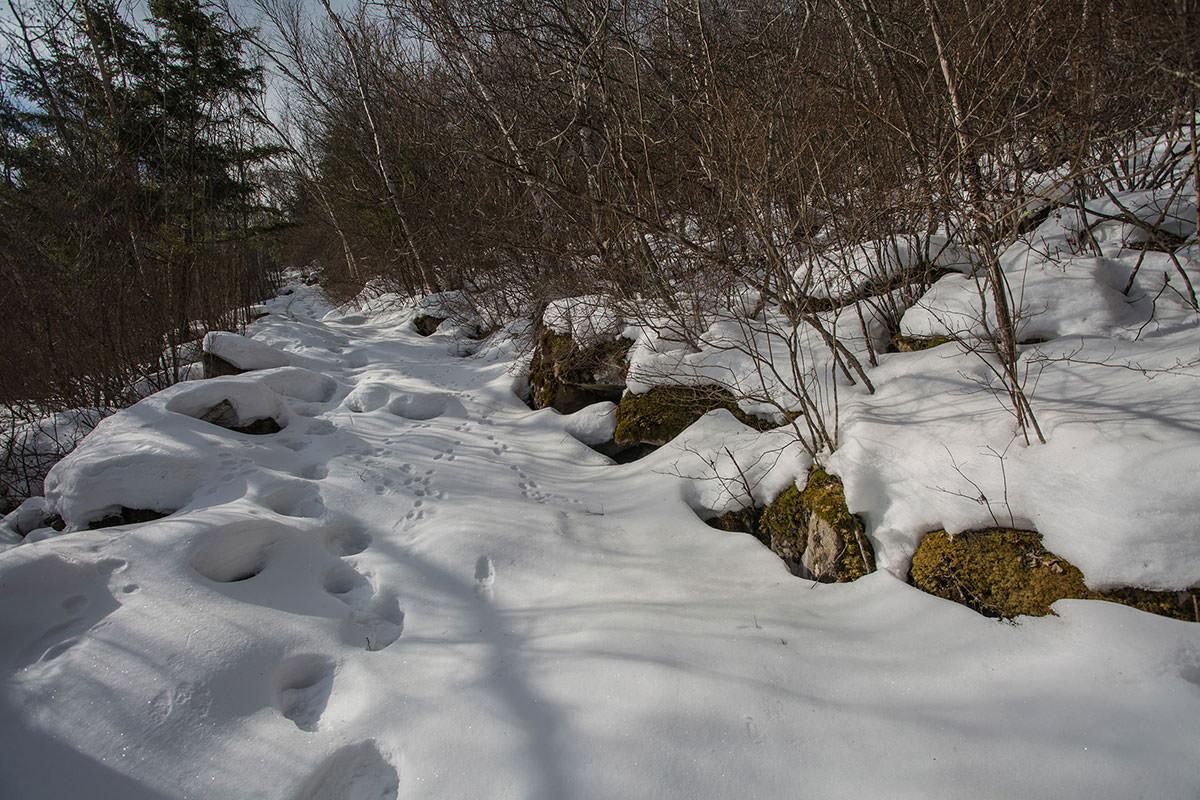 【男山】登山百景-雪が深くなってきた