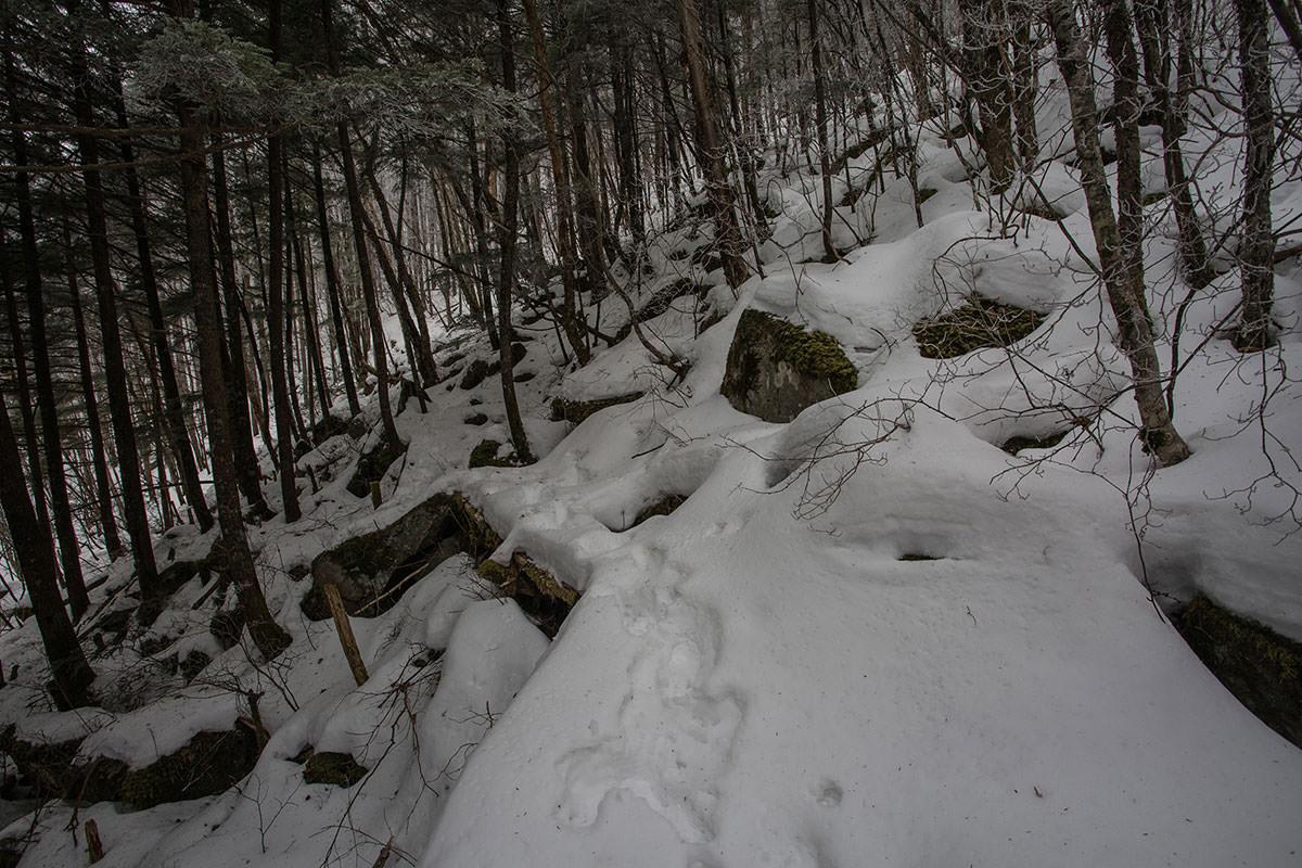 【男山】登山百景-けっこう木も多い