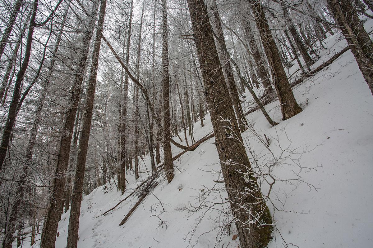【男山】登山百景-見上げると霧氷