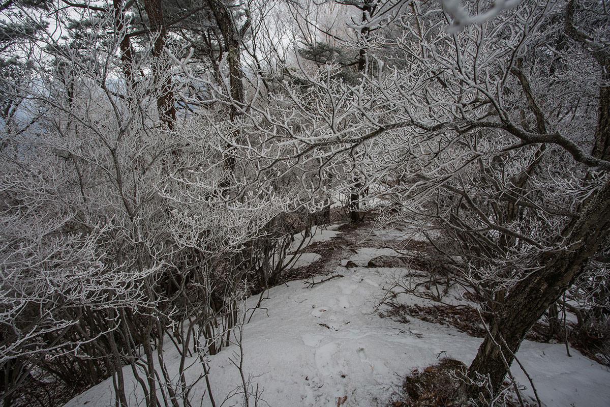 【男山】登山百景-狭くなった稜線