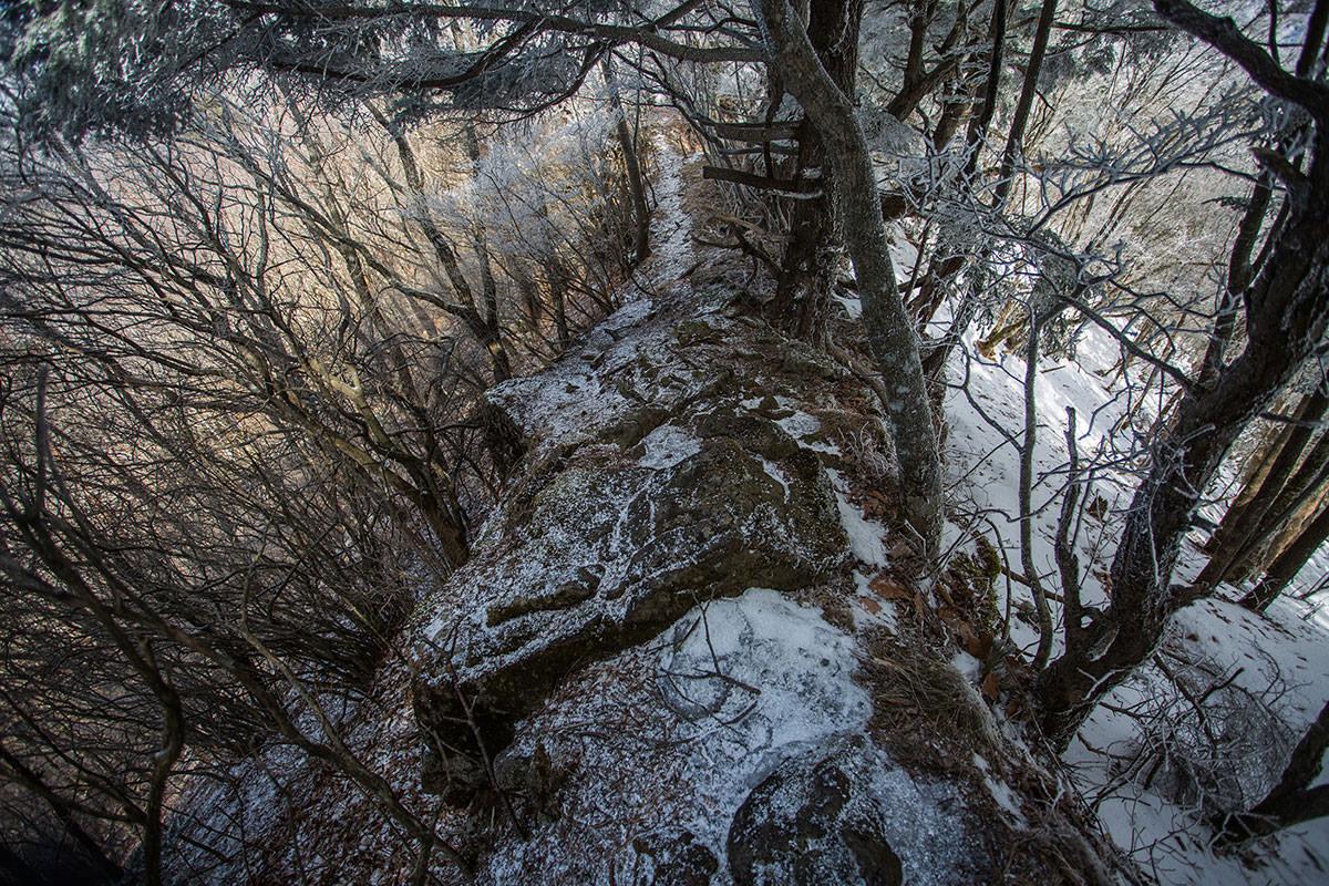 【男山】登山百景-木に囲まれてるけど狭い