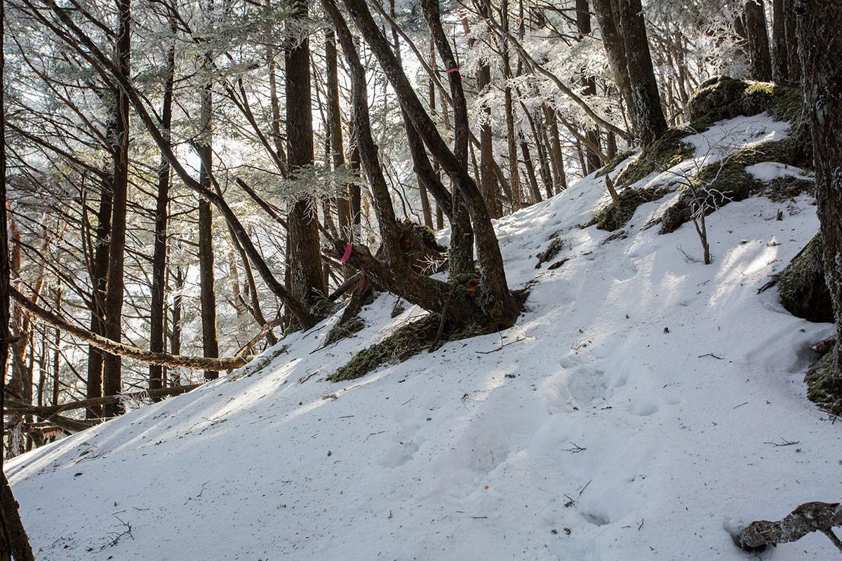 【男山】登山百景-下りは晴れて明るい