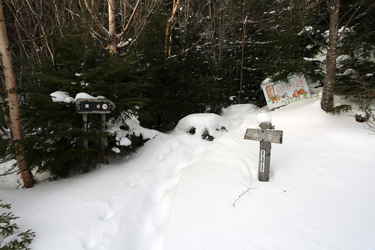 【三叉峰】登山百景-本格的に登山道へ