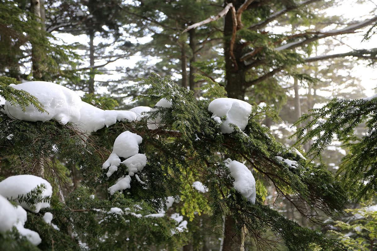 【三叉峰】登山百景-緑が多い