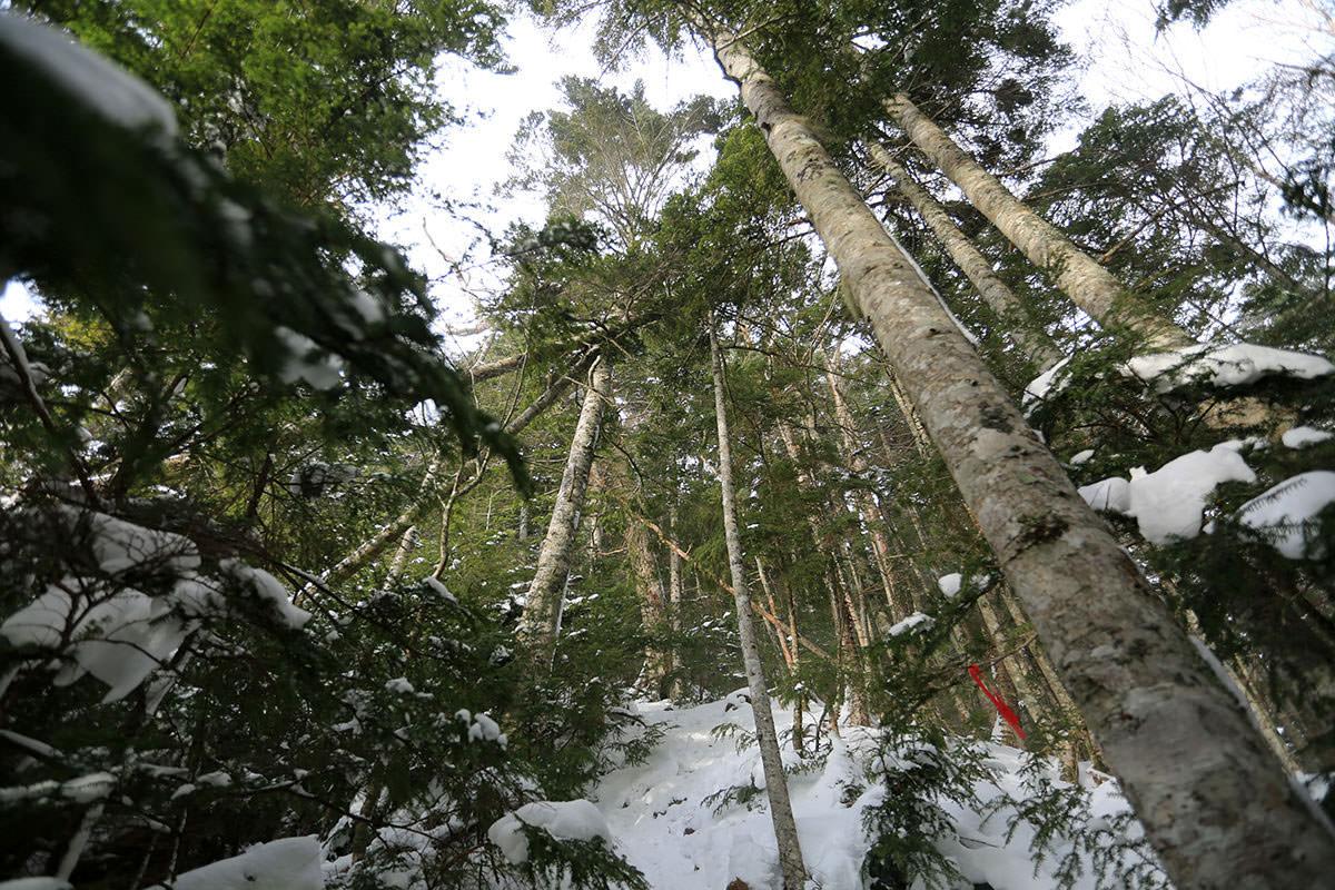 【三叉峰】登山百景-見上げる