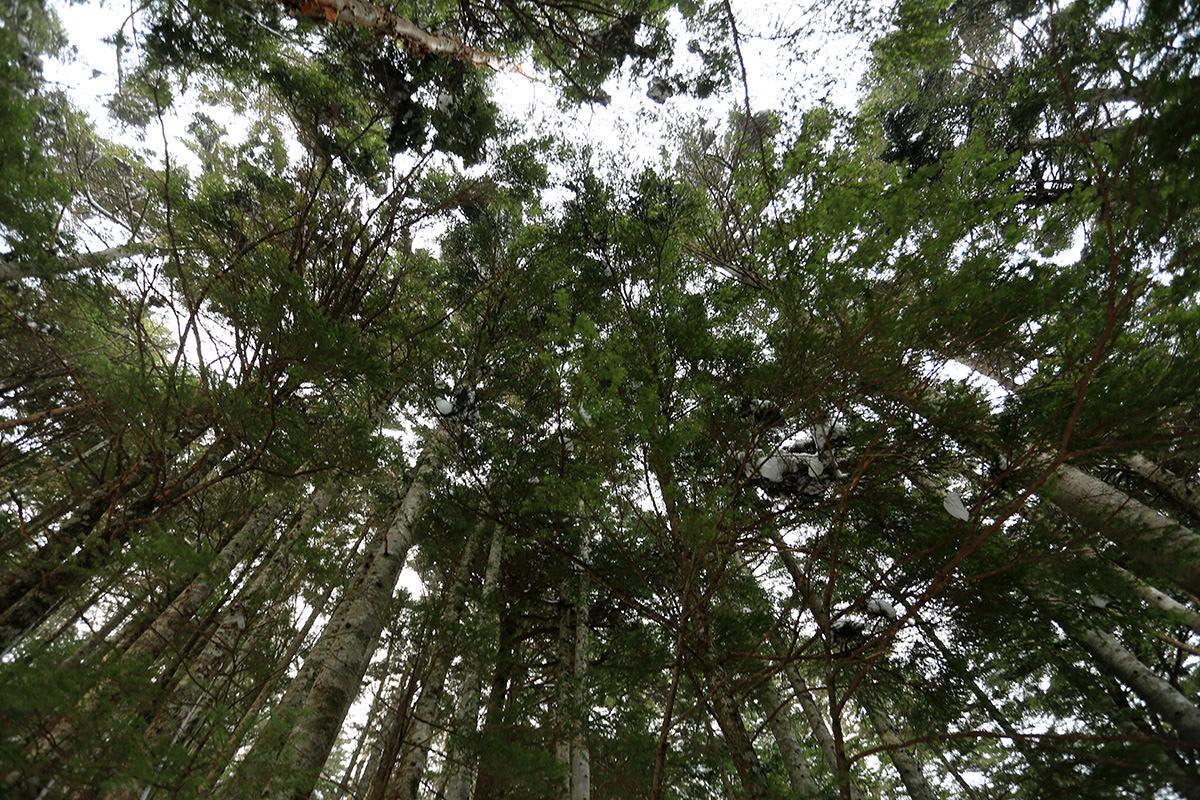 【三叉峰】登山百景-頭上