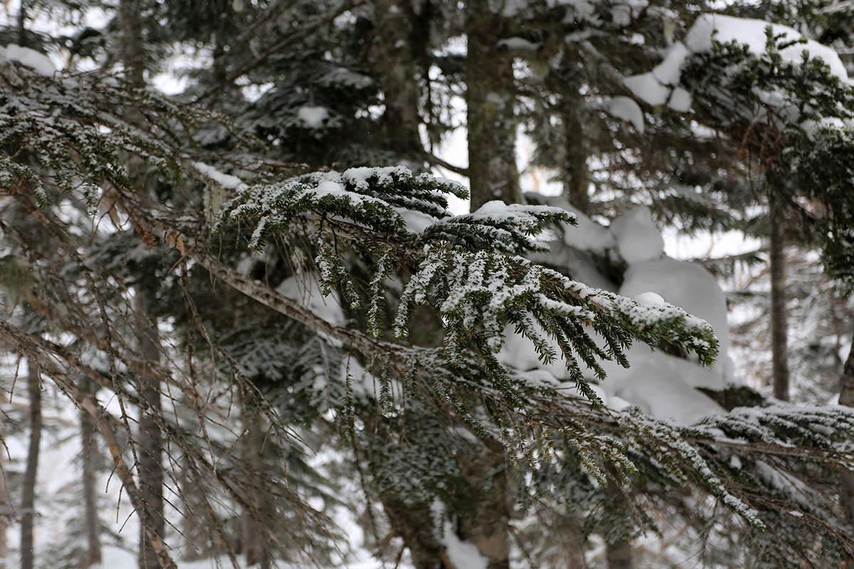 【三叉峰】登山百景-ときどき枝から落ちる
