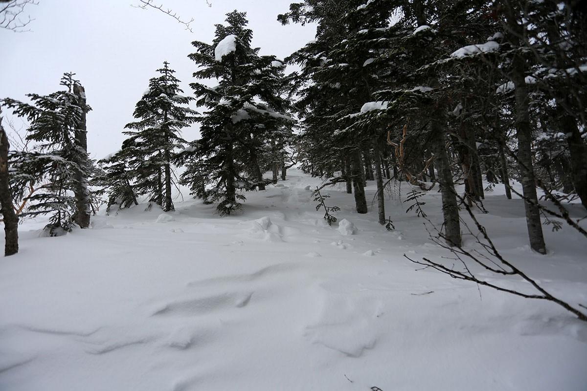 【三叉峰】登山百景-木を抜ける