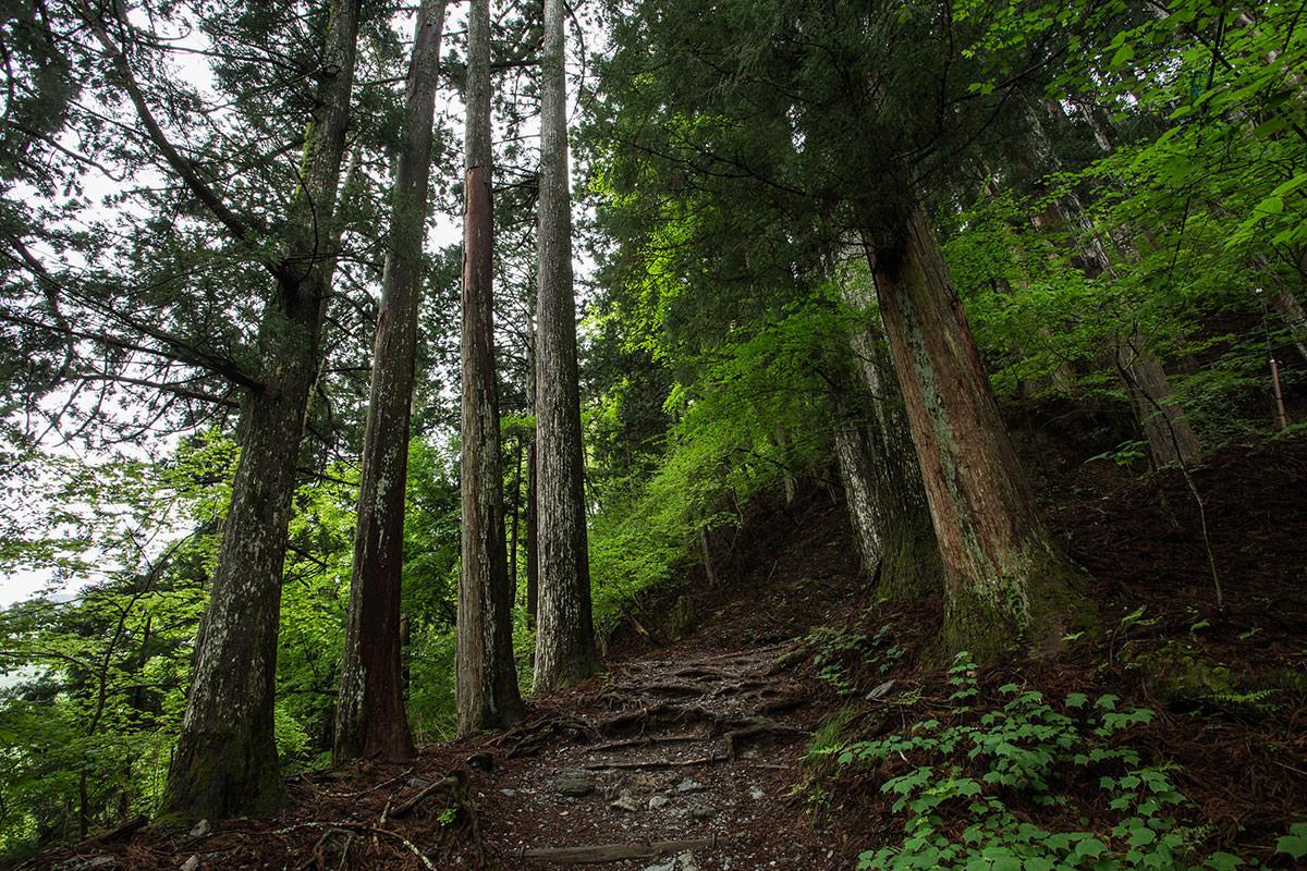 【七面山】登山百景-緑がいっぱい
