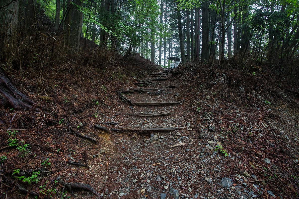 【七面山】登山百景-似たような登山道が続く