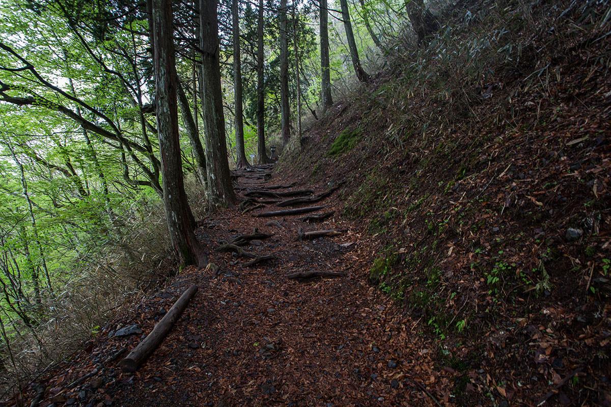 【七面山】登山百景-また木の中を登る