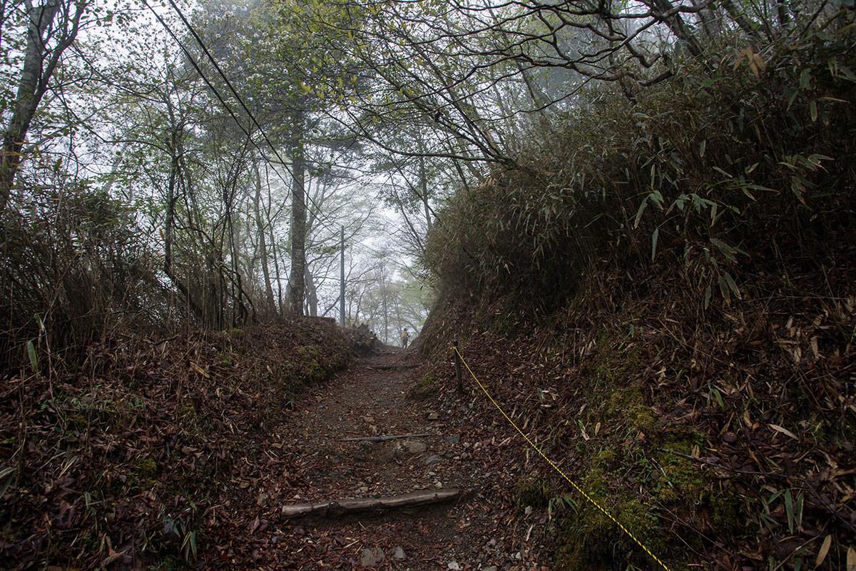 【七面山】登山百景-木の葉が減った