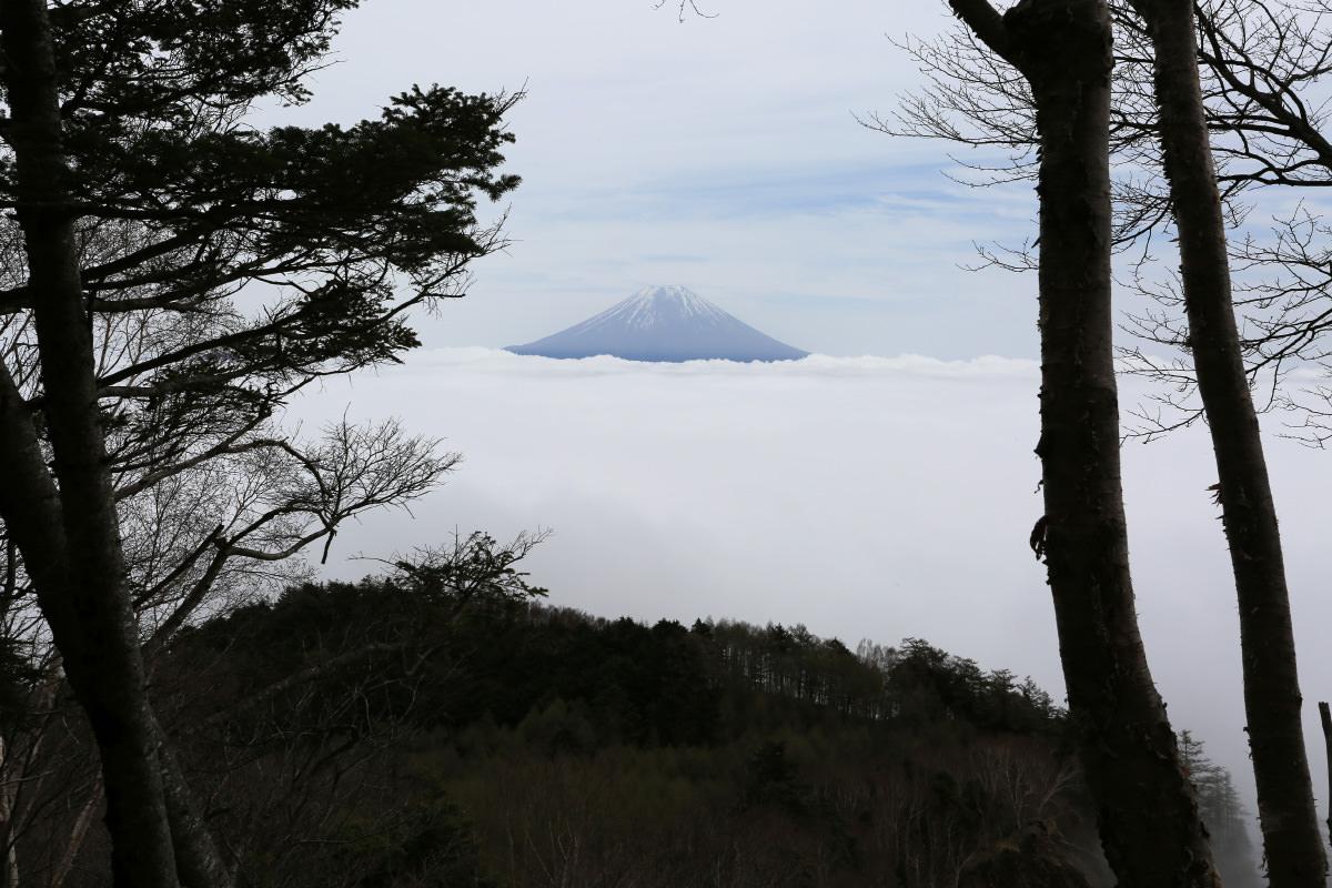 七面山登山道から見る富士山