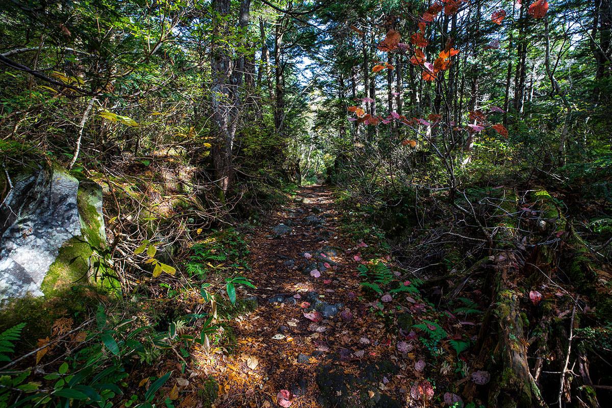 序盤は森の中
