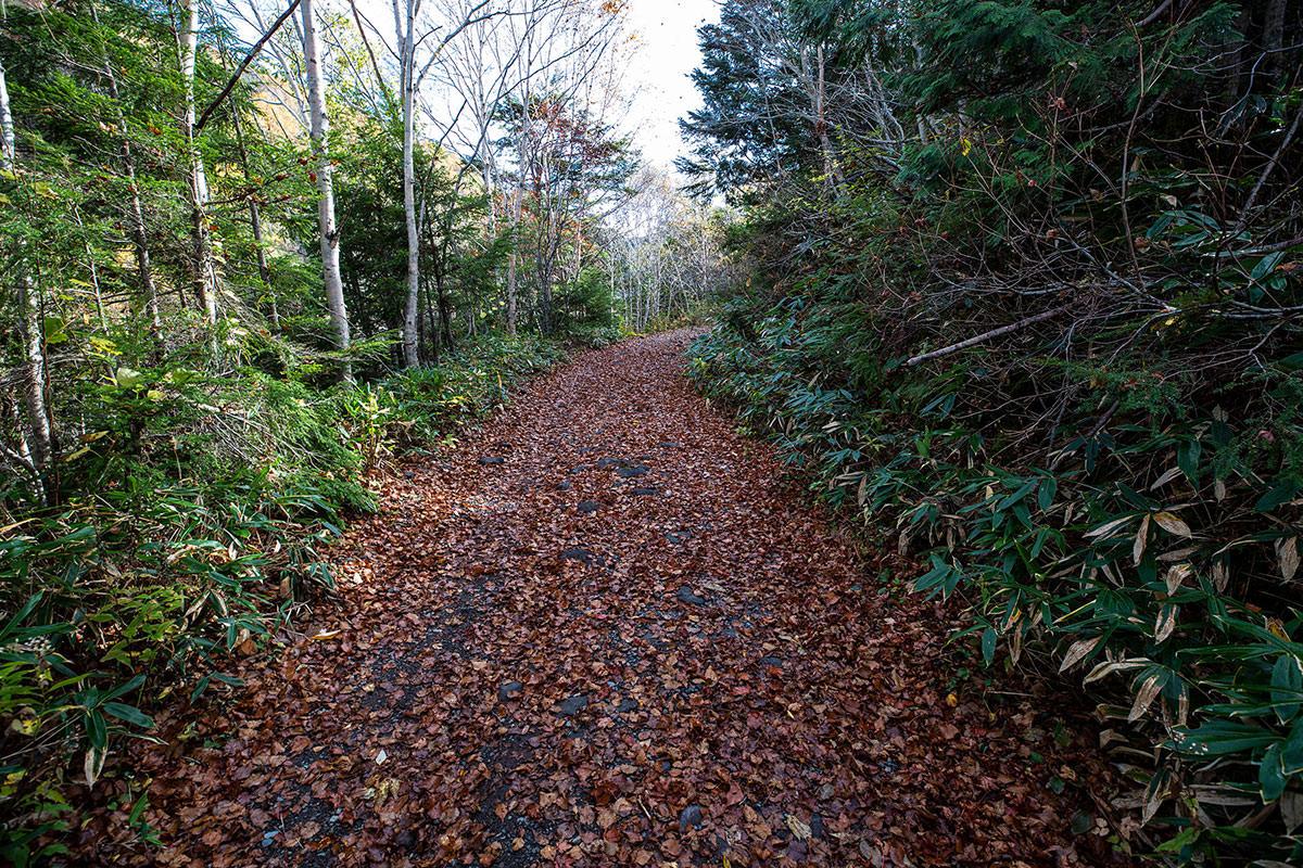 林道は落ち葉だらけ
