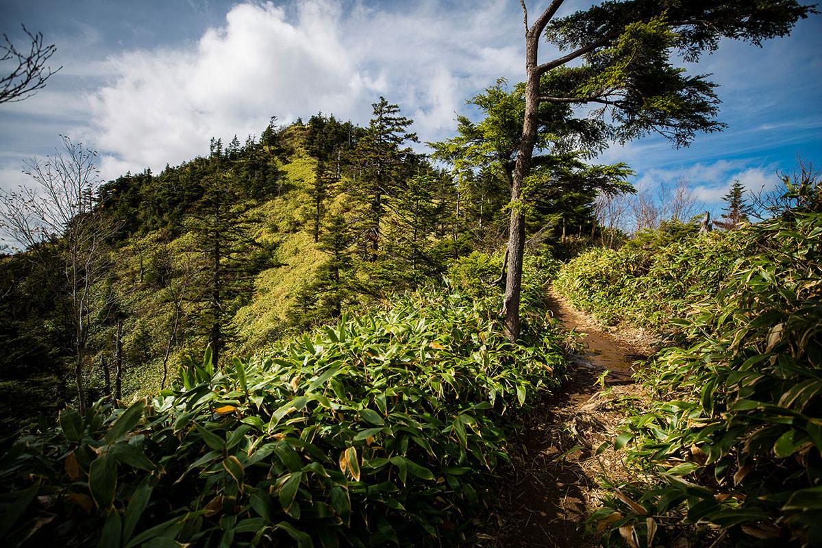 志賀山の山頂が近い