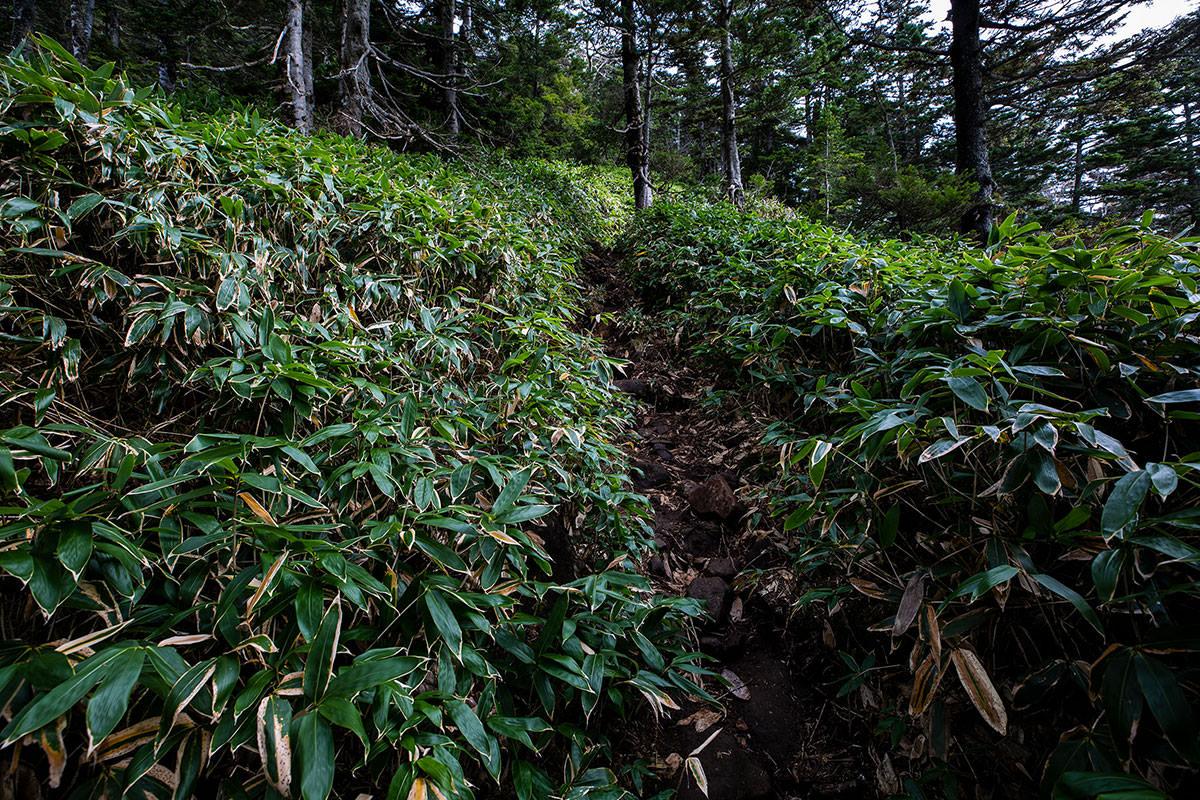 裏志賀山へ登り返す