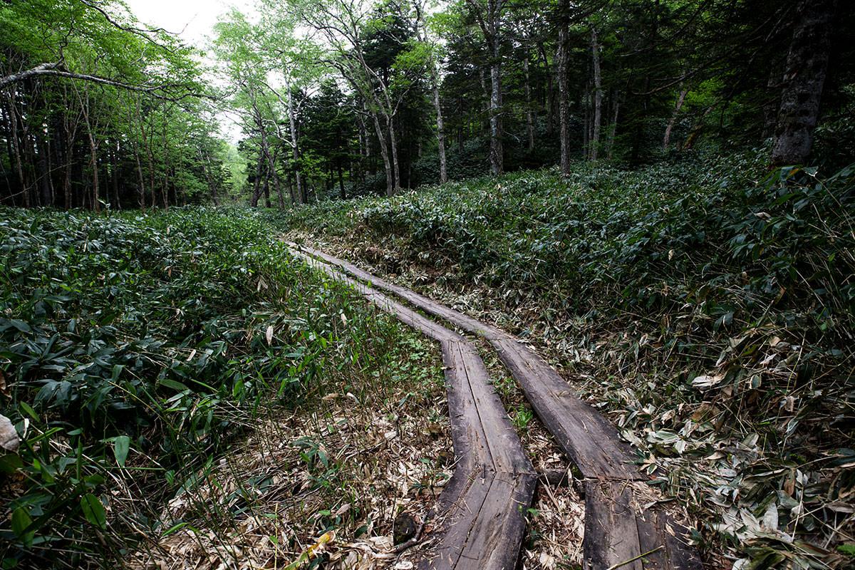 笹の湿原を抜けて登山道へ