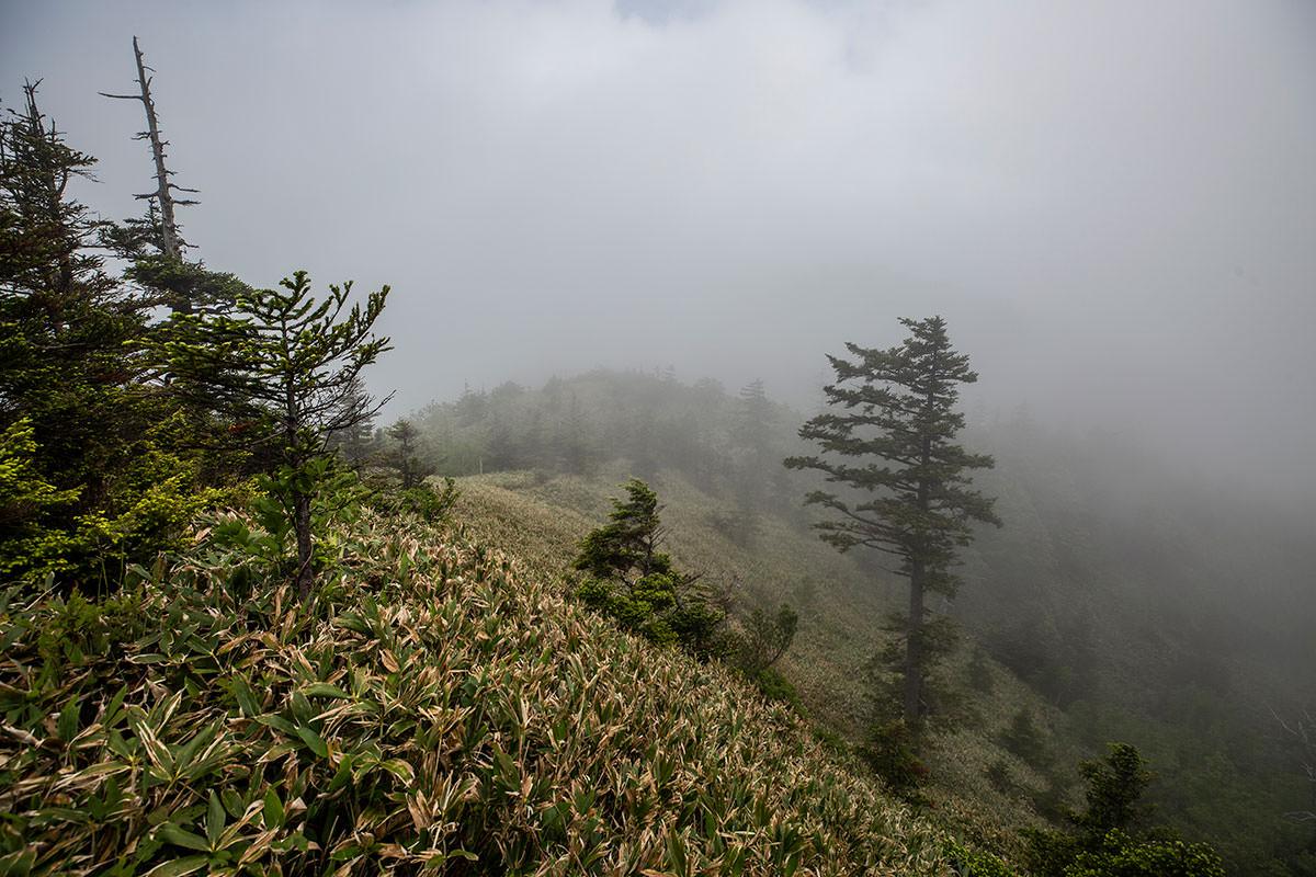 裏志賀山へ向かって山を下りる
