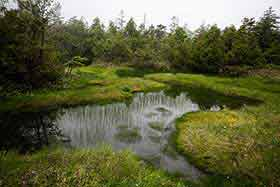 池塘がいっぱい