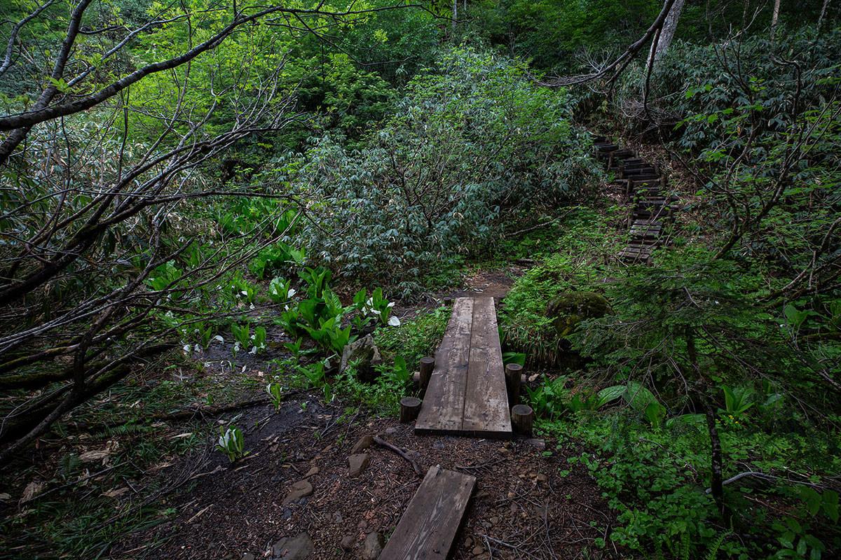 【白馬岳 栂池自然園】登山百景-登山道の脇に花がちょいちょいある