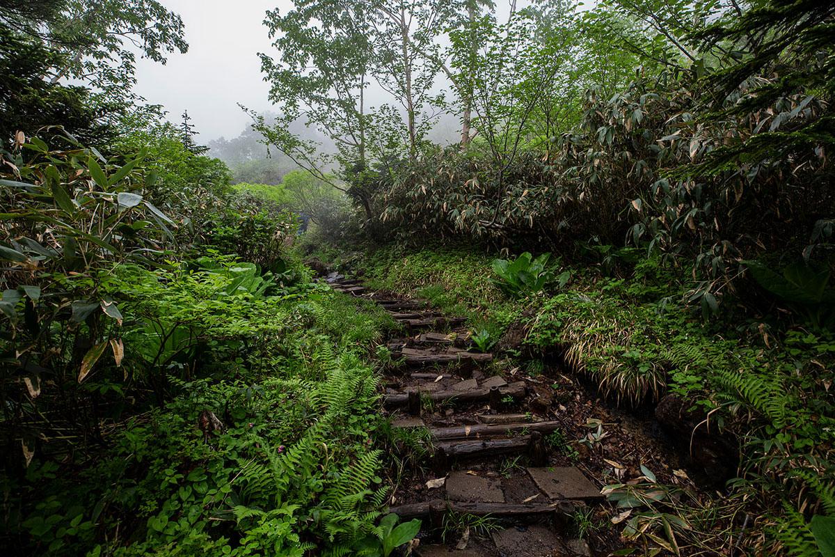 【白馬岳 栂池自然園】登山百景-湿り気強め