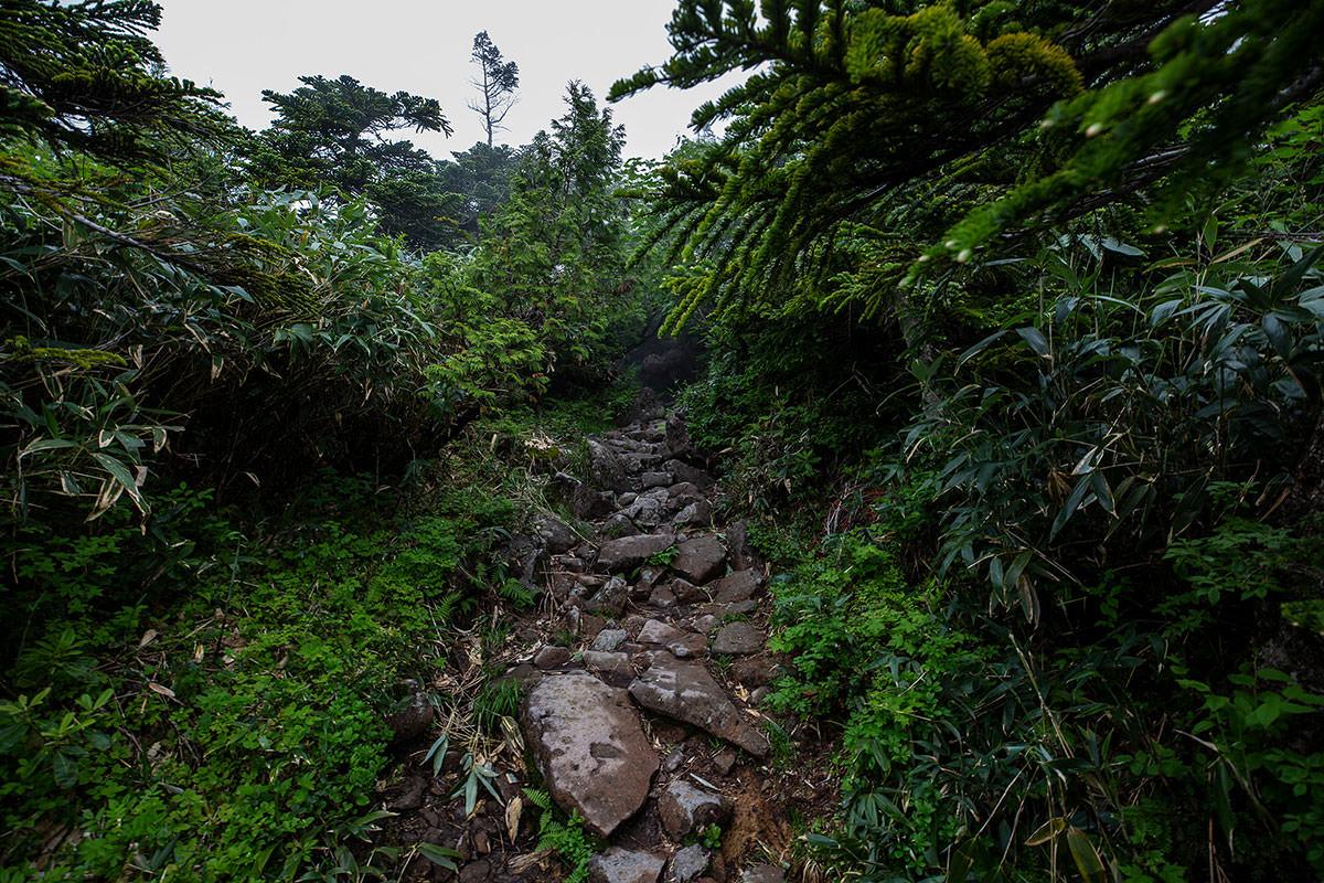 【白馬岳 栂池自然園】登山百景-緑が繁っている