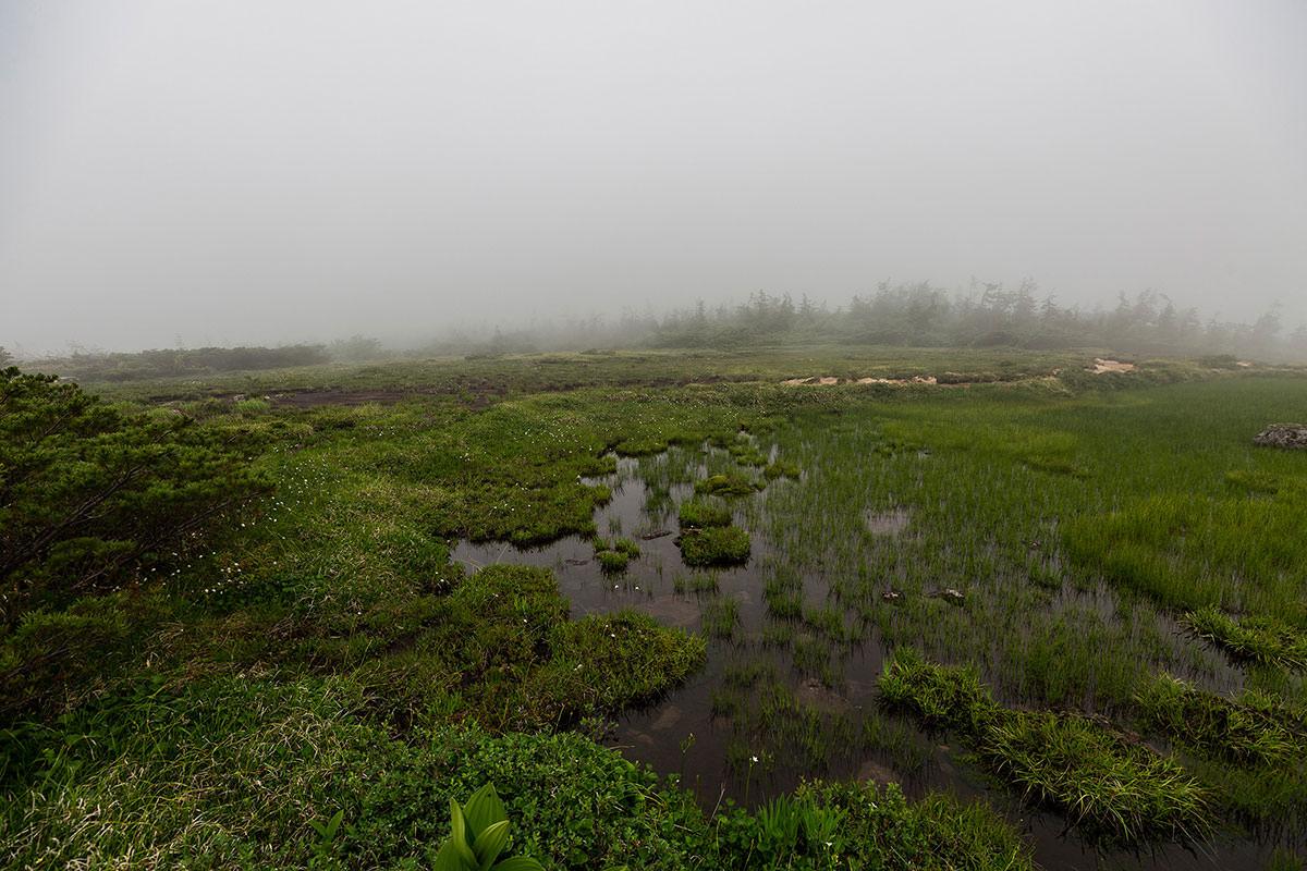 【白馬岳 栂池自然園】登山百景-ガスってる湿原