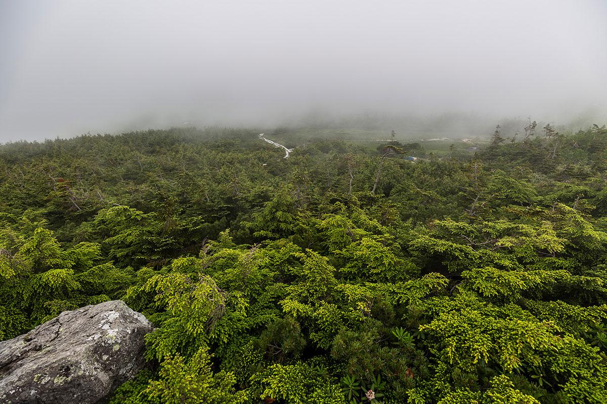 【白馬岳 栂池自然園】登山百景-祠からは湿原がよく見える