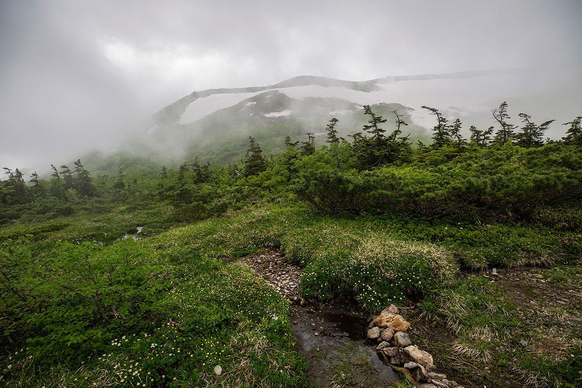 【白馬岳 栂池自然園】登山百景-シャクナゲがあった