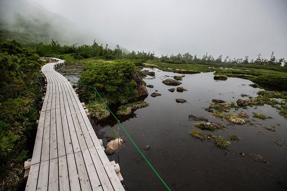 【白馬岳 栂池自然園】登山百景-チングルマも風に吹かれてた
