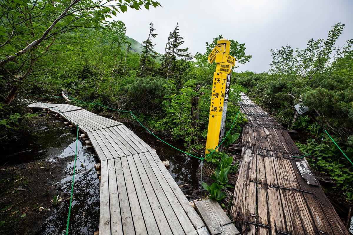 【白馬岳 栂池自然園】登山百景-風吹大池との分岐