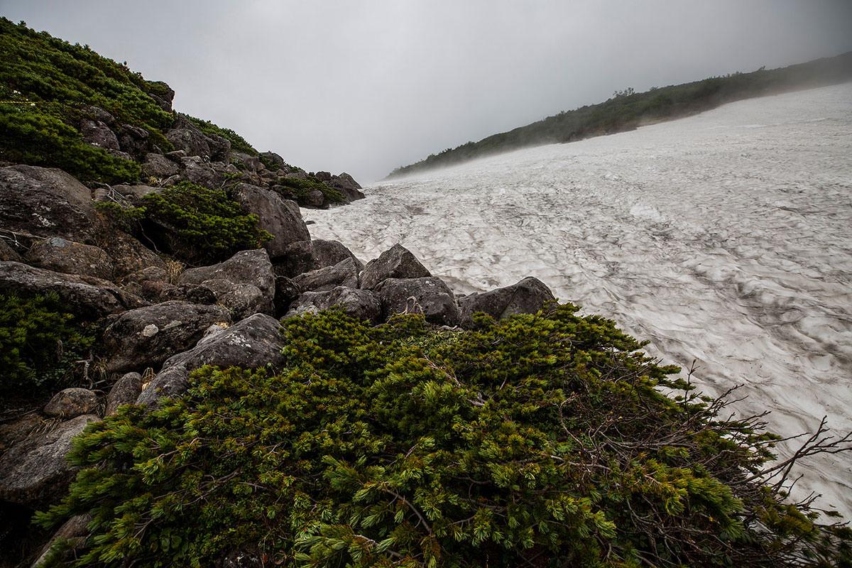 【白馬岳 栂池自然園】登山百景-雪渓を登っても雪