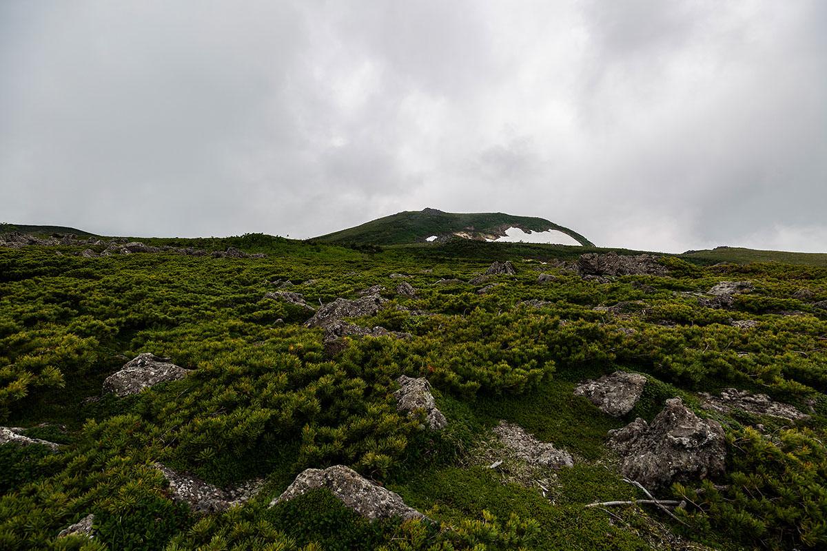 【白馬岳 栂池自然園】登山百景-東側の峰が高く見える