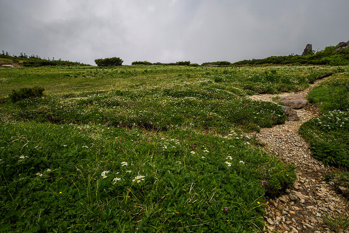 【白馬岳 栂池自然園】登山百景-近くには花がいっぱい