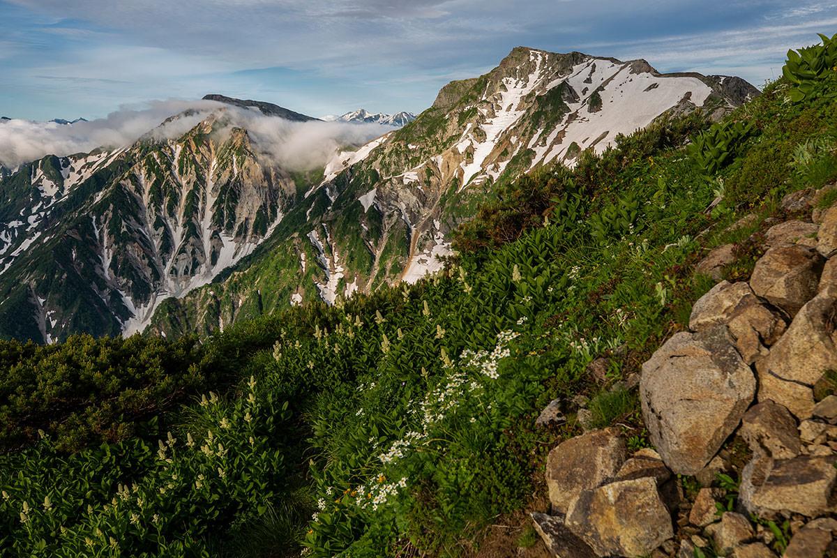 【白馬岳 栂池自然園】登山百景-白馬岳を後ろに花