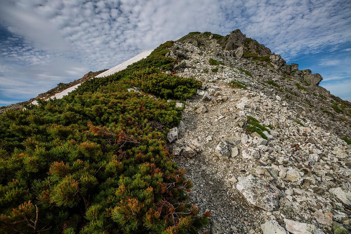 【白馬岳 栂池自然園】登山百景-ハイマツが赤い