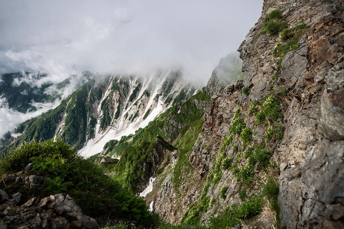 【白馬岳 栂池自然園】登山百景-崖に花がいっぱい