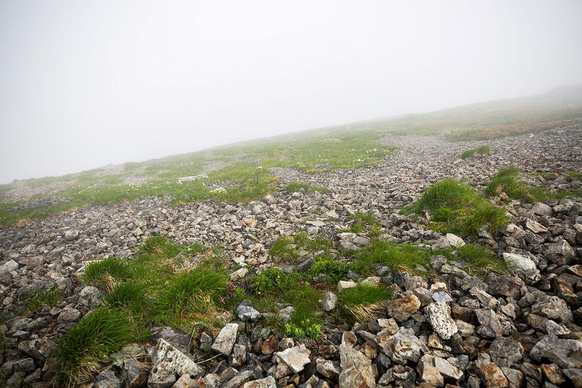 【白馬岳 栂池自然園】登山百景-山頂の周りにも花