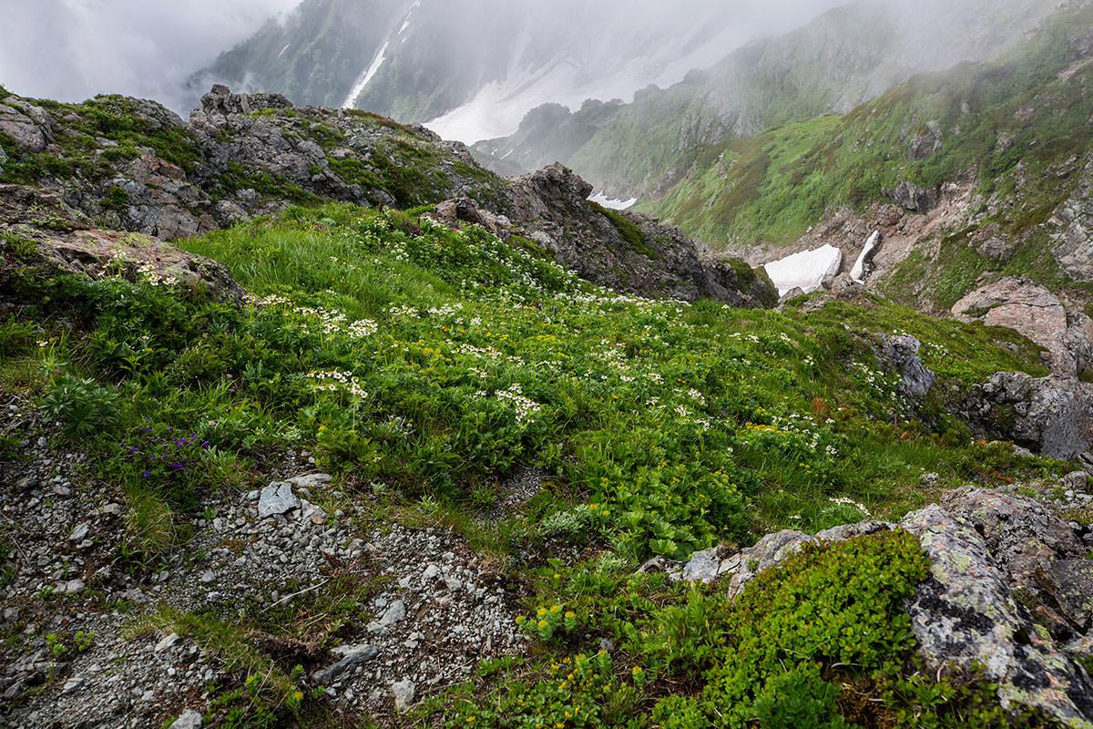 【白馬岳 栂池自然園】登山百景-見下ろすと花