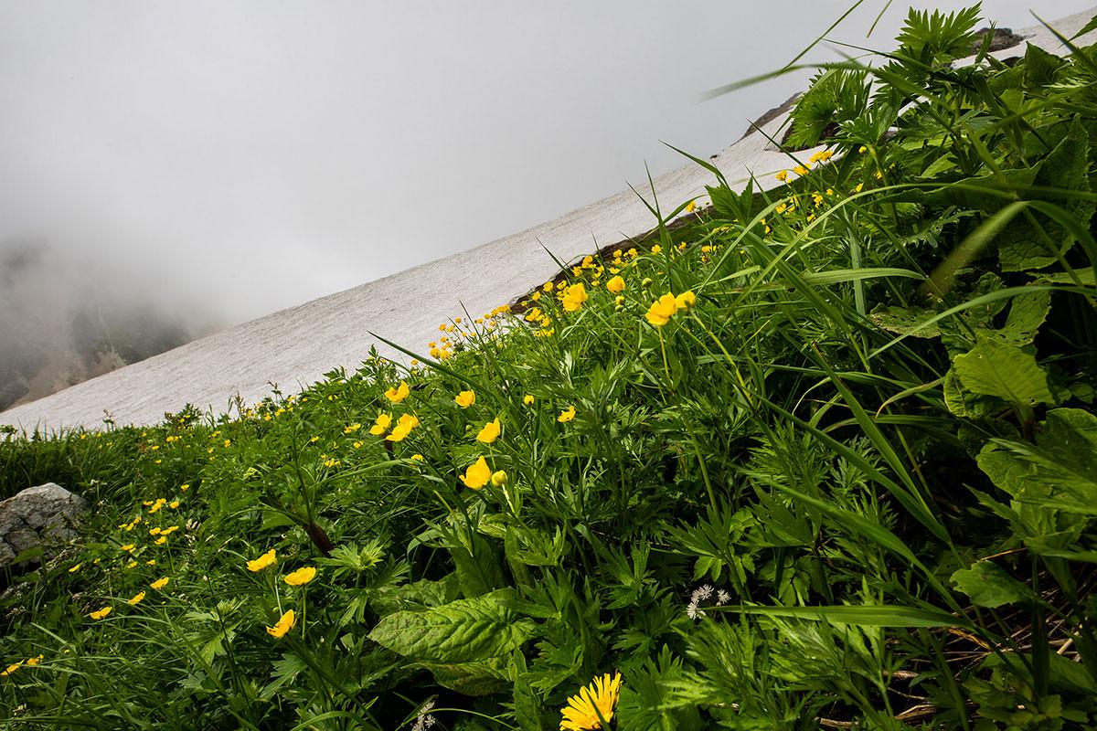 【白馬岳 栂池自然園】登山百景-大雪渓の上も花多い