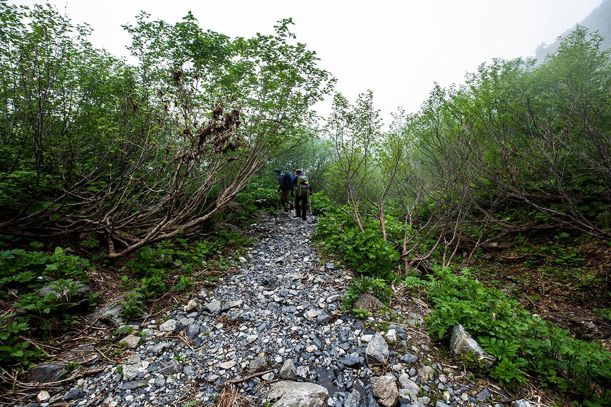 【白馬岳 栂池自然園】登山百景-樹林帯を下りる