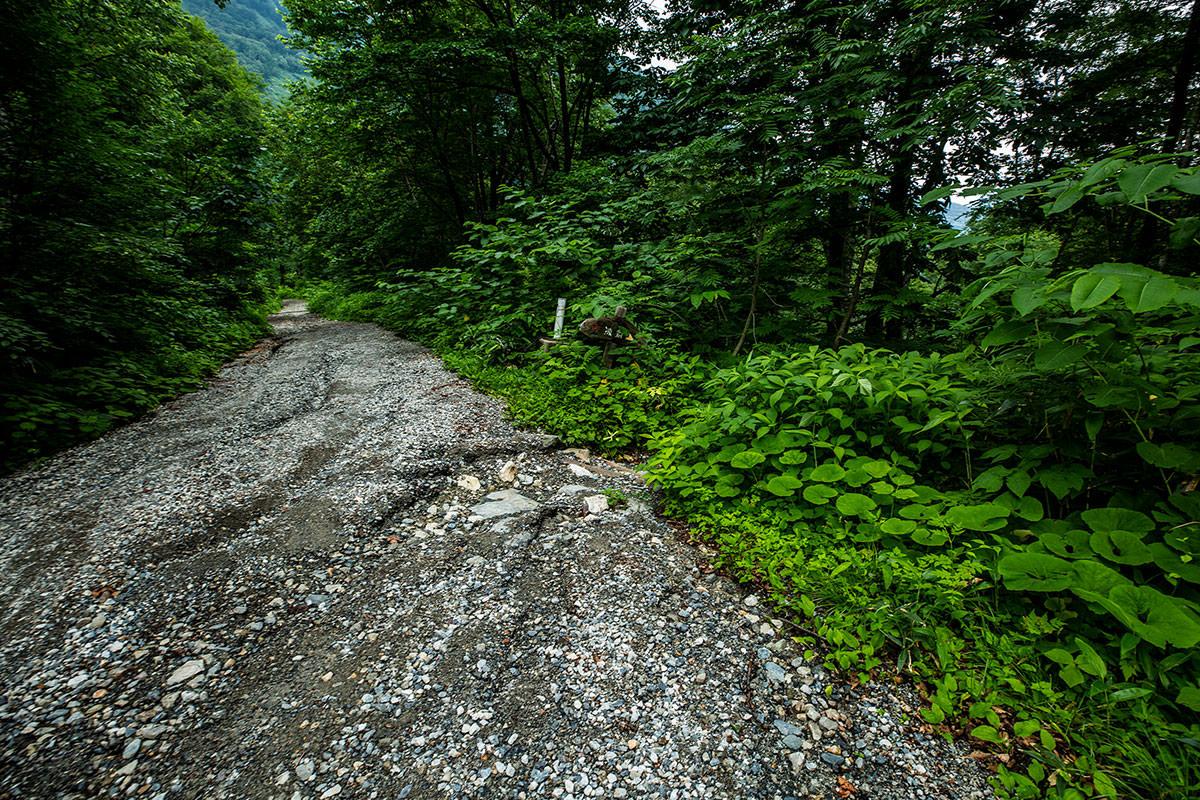 【白馬岳 栂池自然園】登山百景-林道から右へ入る