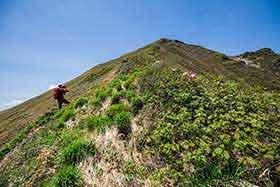 万太郎山はシャクナゲが多い